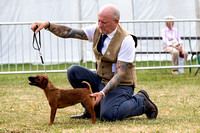 GYS_Terriers_Afternoon_Ring_Three_12th_July_2018_004