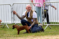 GYS_Terriers_Afternoon_Ring_Three_12th_July_2018_001