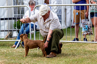 GYS_Terriers_Afternoon_Ring_Three_12th_July_2018_002