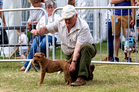 GYS_Terriers_Afternoon_Ring_Three_12th_July_2018_003