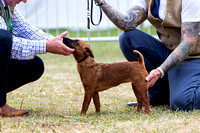 GYS_Terriers_Afternoon_Ring_Three_12th_July_2018_006