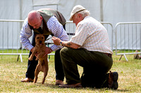 GYS_Terriers_Afternoon_Ring_Three_12th_July_2018_009