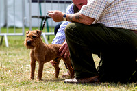 GYS_Terriers_Afternoon_Ring_Three_12th_July_2018_011
